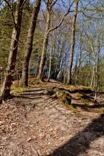 Hinter dem Hof Aue erreicht man das Asphaltsträßchen, das zum Schöllerhof führt, den man auch bereits von weitem sieht. Hier direkt um die Ecke einem steilen Pfad rechts in den Hang hinein folgen. Der jetzt folgende Weg ist noch mal echt super!
