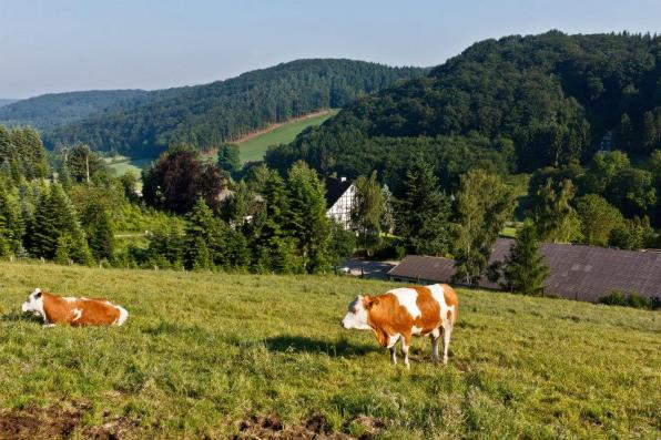 RainerElfringhauserSchweiz (2)