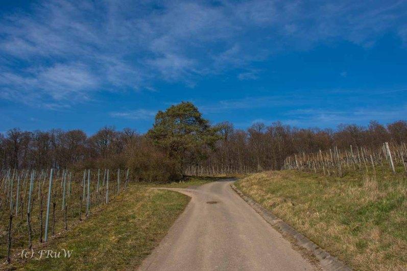 Trittenheim (108)