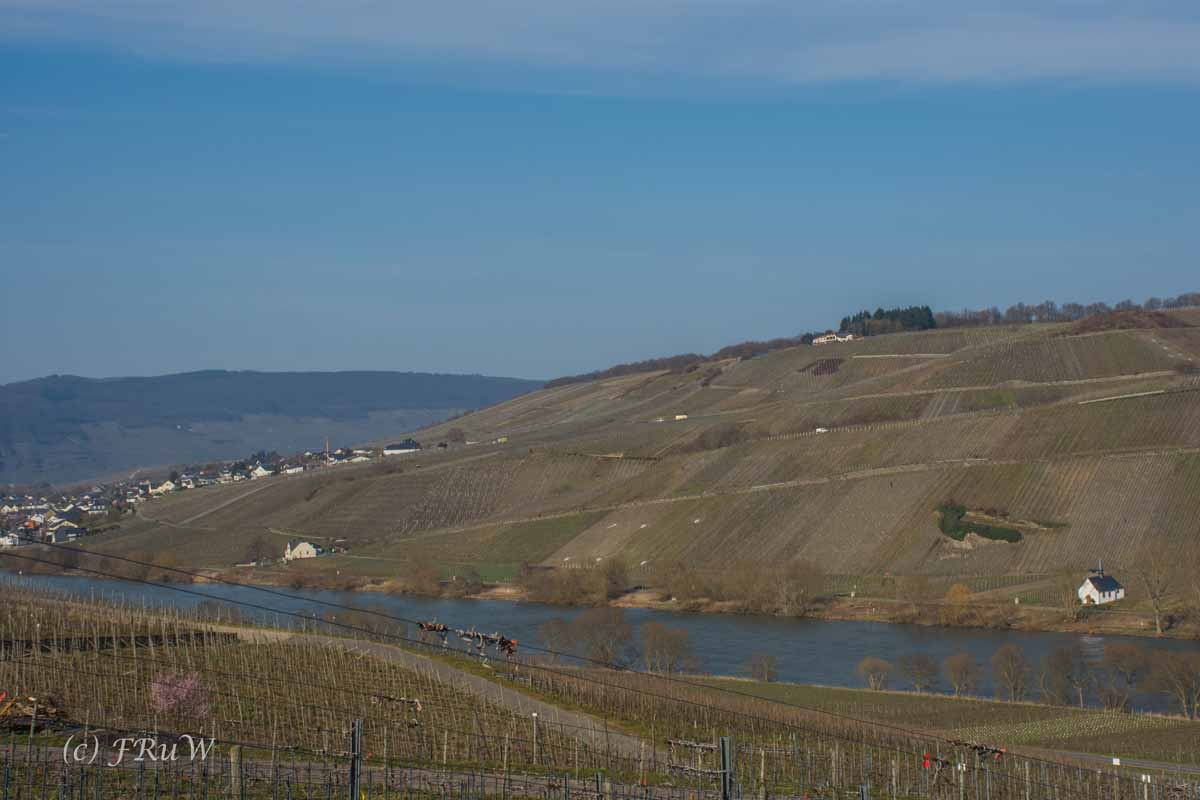 Trittenheim (140)