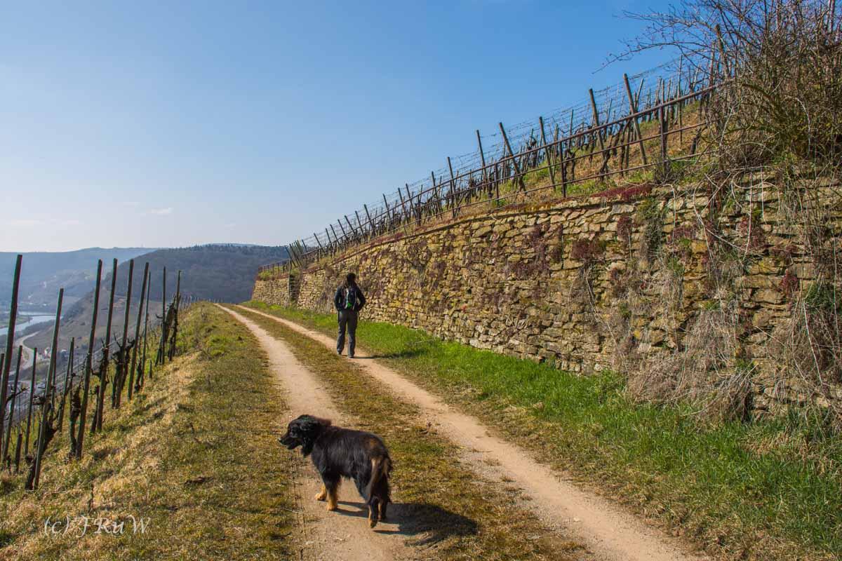 Trittenheim (94)