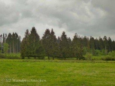 NaturWanderPark delux- Moore-Pfad Schneifel