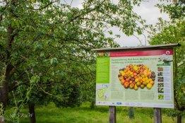 Kloster Knechtsteden_und_Tierpark_0448
