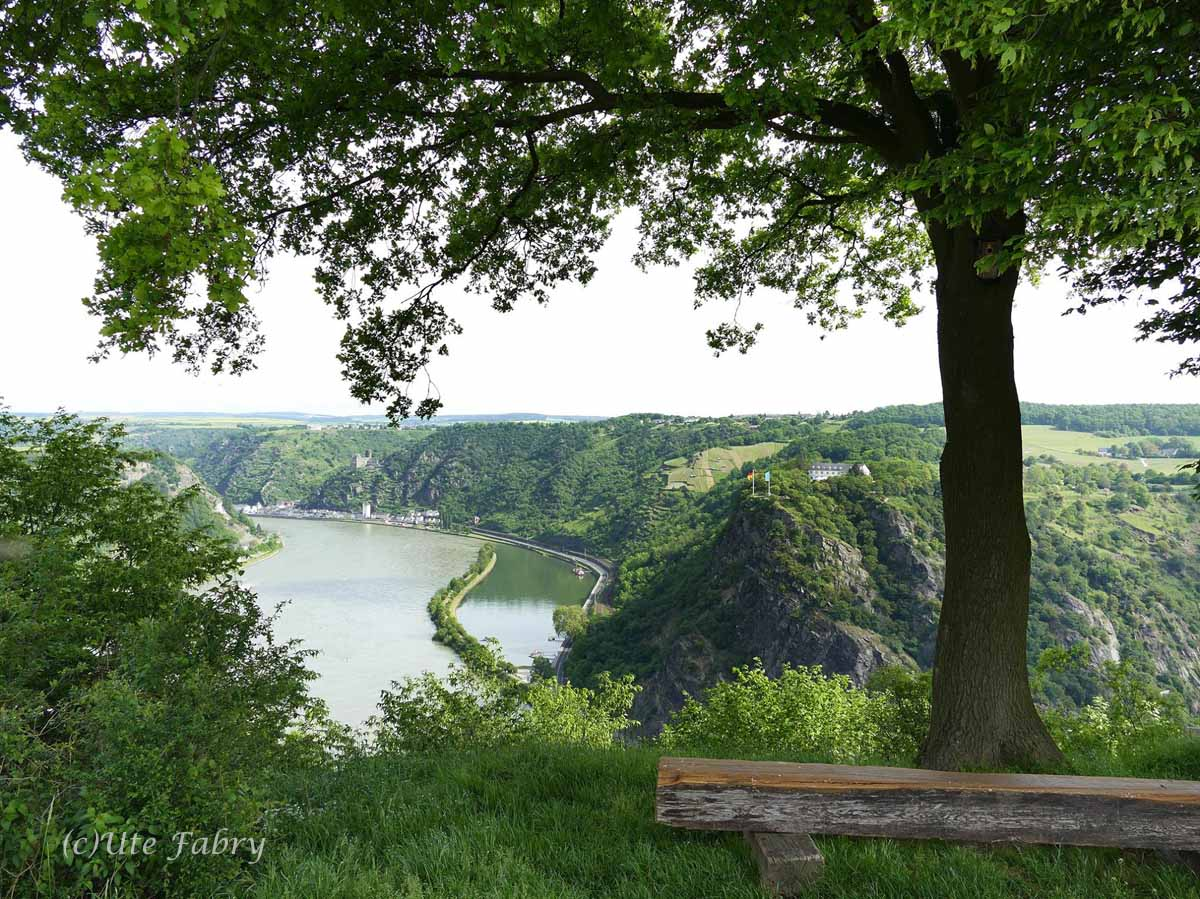 Blick auf die Loreley vom Rheinburgenweg