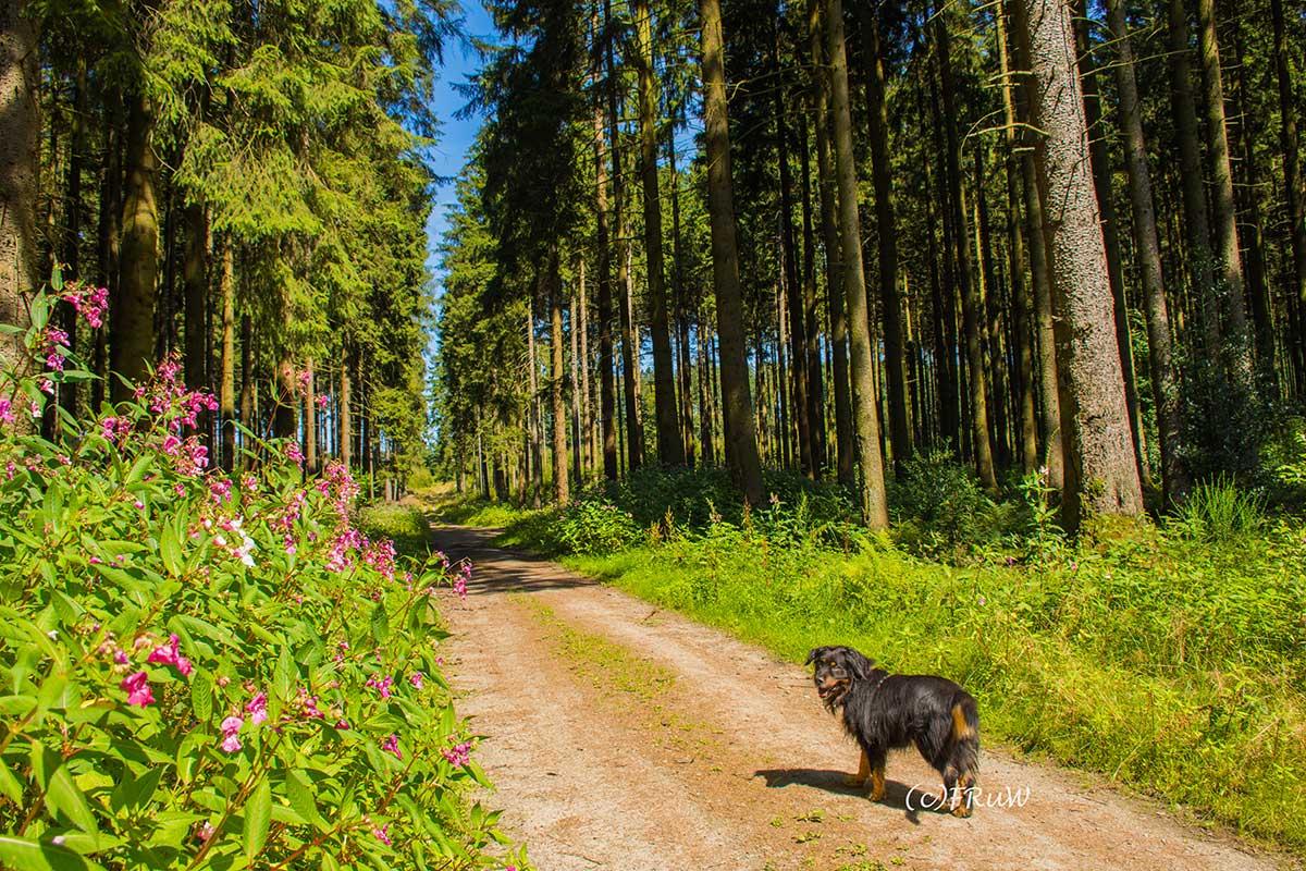 BergischerStreifzugFuhrmannsweg-(137)