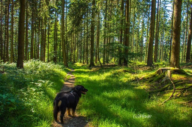 BergischerStreifzugFuhrmannsweg-(235)