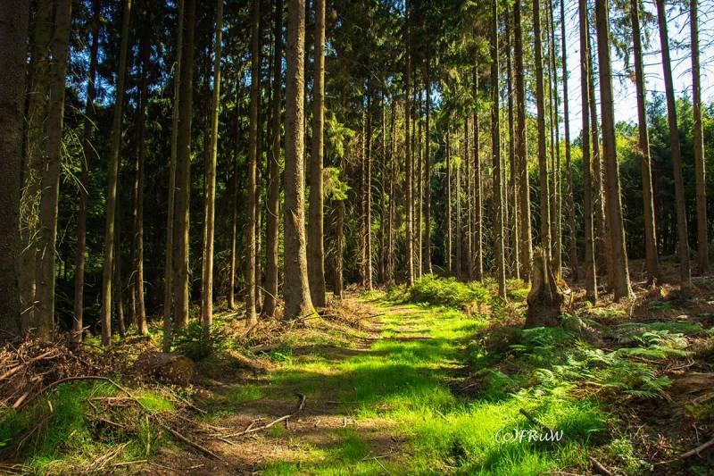 ErlebniswegeSieg_Holzweg-(214)