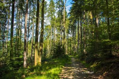 ErlebniswegeSieg_Holzweg-(53)