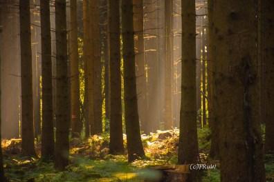 fuchskaute_erlebnisschleife_westerwald-44