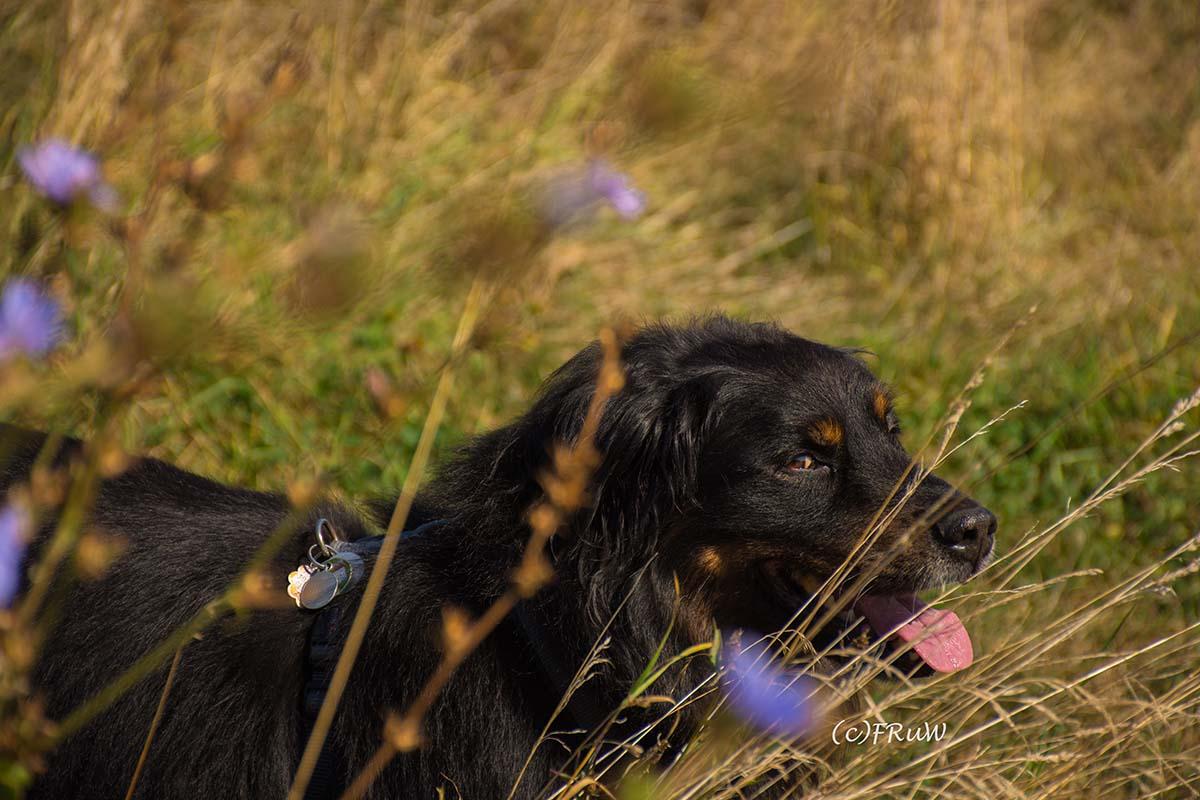 """Spike mein Hund im Thema """"Mein Portrait"""""""