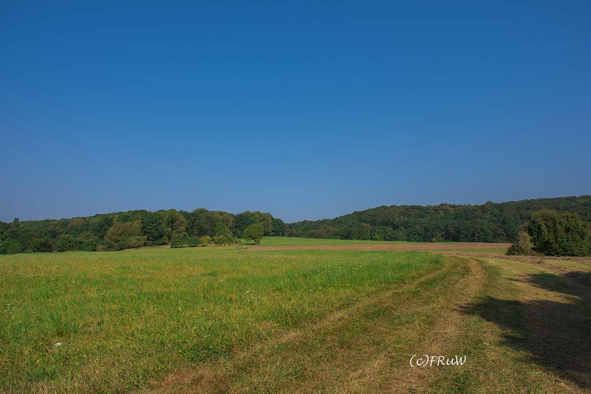 rheinsteig_rodenbach_leutesdorf-73