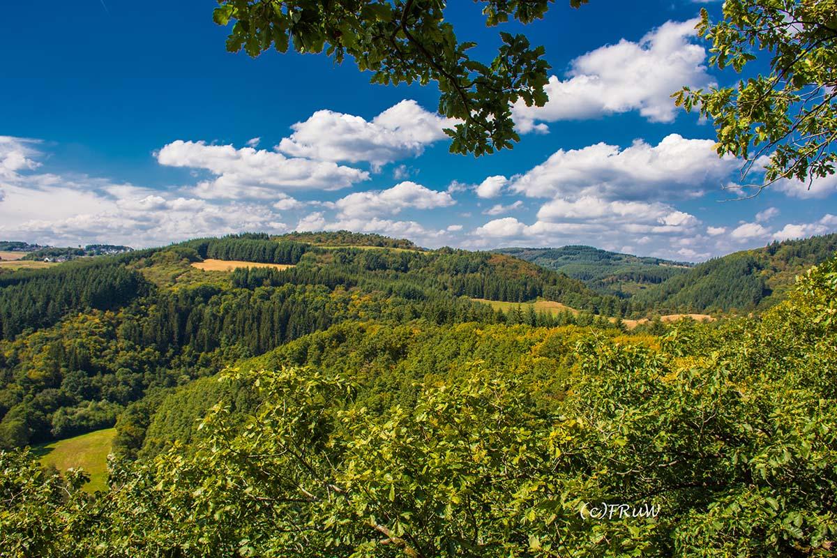 wacholder_ginster_-pilgerpfade-bei-st_-jost-132