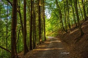 wacholder_ginster_-pilgerpfade-bei-st_-jost-222