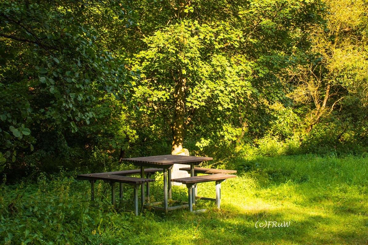 wacholder_ginster_-pilgerpfade-bei-st_-jost-300