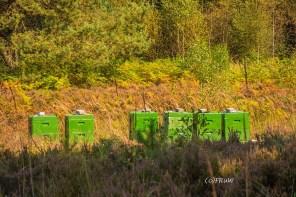 Die letzten Stöcke der Bienen, die noch ein wenig Heidehonig sammeln