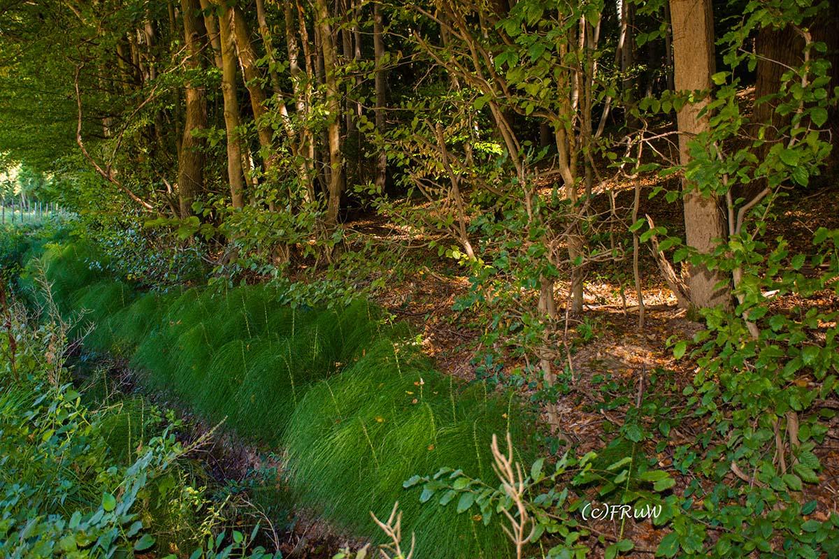 Gräser am Waldrand