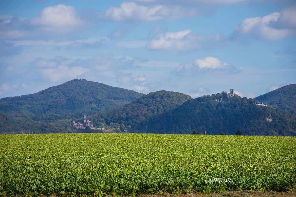 Der große Ölberg, die Drachenburg und Drachenfels