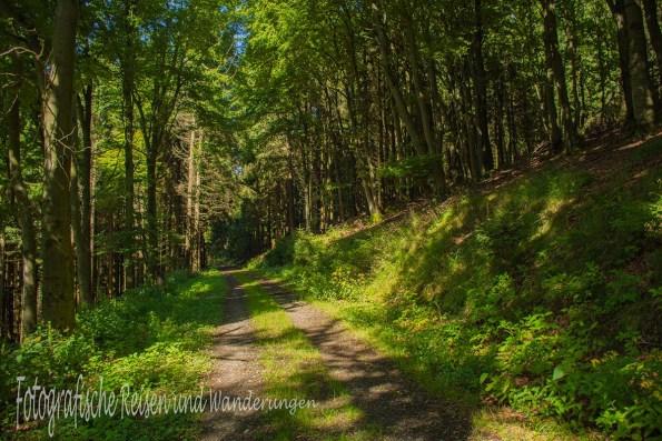 Weiche Wege durch den Wald
