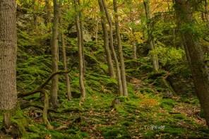 Bemooste Felsen im Wald