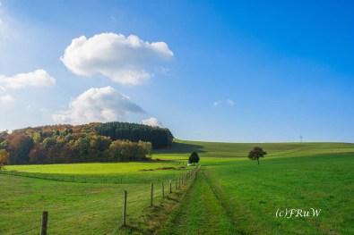 ruwerhochwaldschleife-51