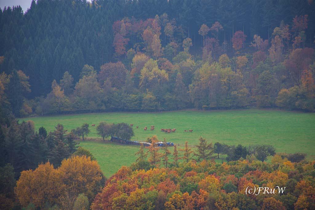 ruwerhochwaldschleife-78