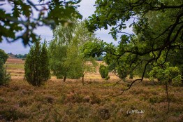 wilsederberg_wilseden_und_campreinsehlen-43