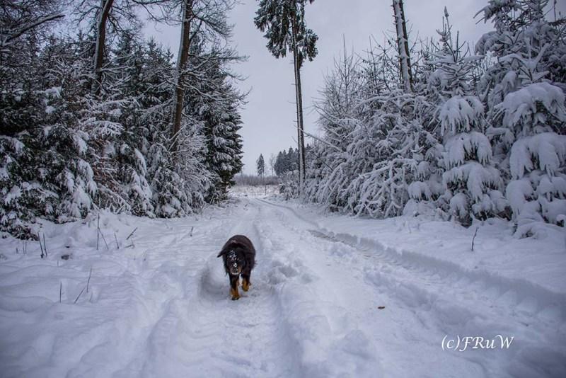 Schneelandschaft bei Eckenhagen Winter Wanderungen NRW