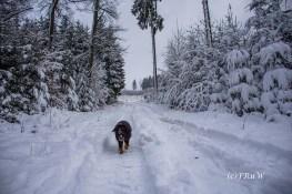 Schneelandschaft bei Eckenhagen