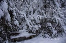 bergischerstreifzugwacholderweg-97