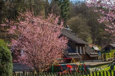 Hungenbachrunde (146)