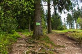 Liebesbankweg (70)