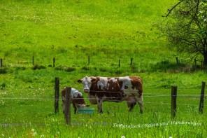 Weide mit Kuh und Kalb