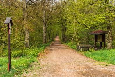 Bodetalrunde Thale Treseburgf (63)
