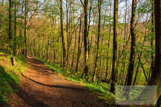 Wandwege Richtung Burgruine Anhalt
