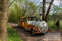 Bimmelbahn zur Burg Falkenstein