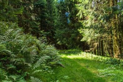 Hörlepanoramaweg (143)