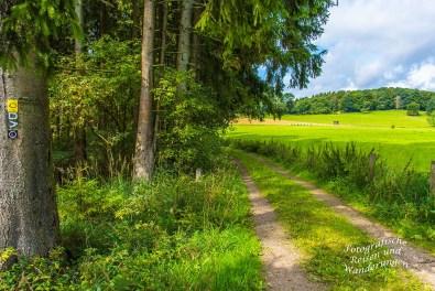 Oberbergischer Lutherweg (62)