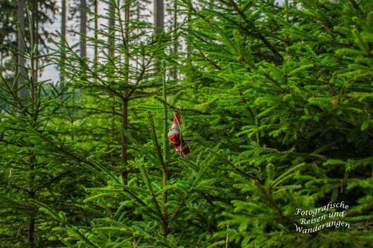 Auf dem Pirschweg im Naturerlebniszentrum Wisent-Welt