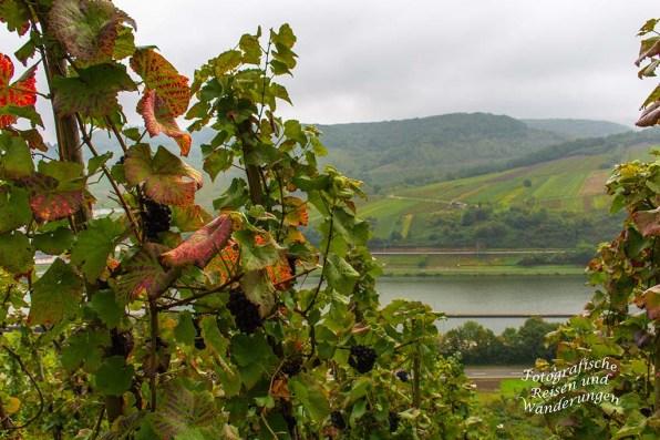 Blick zur Mosel - Herbststimmung