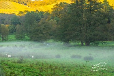 Auf den Höhen, in den Weinbergen scheint noch die Sonne. Hier unten wabbert der Nebel