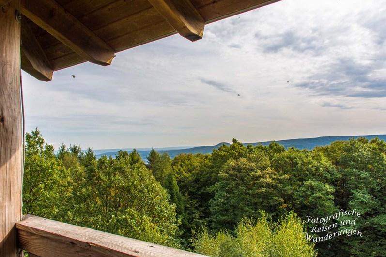 Blick vom EVA Turm in die Baumwipfel