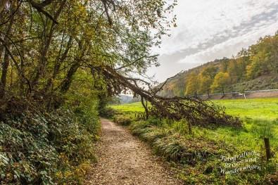 Rund um den Laacher See (101)