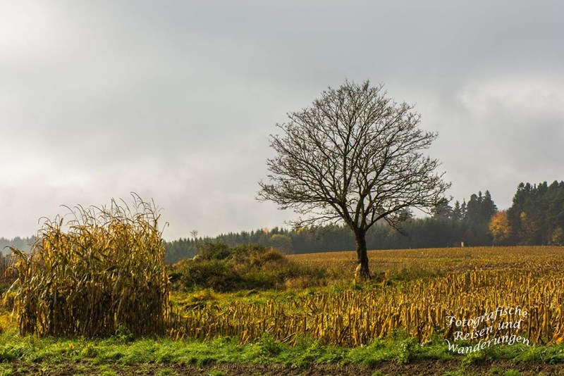 Stumpfarmweg (105)