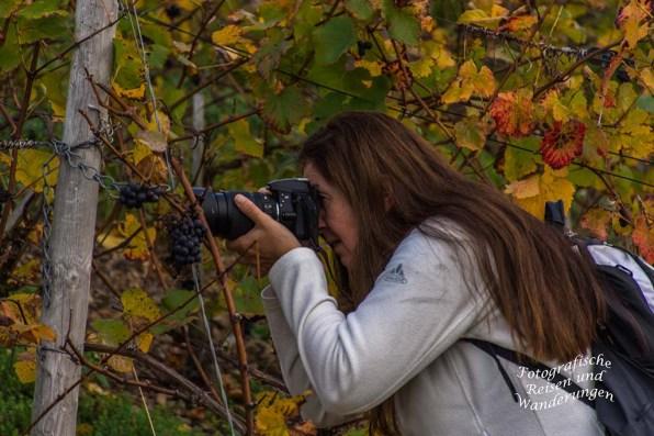 Tanja vor den letzten Weintrauben der Weinberge mit der Kamera in der Hand.
