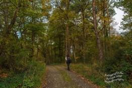 Waldwege Der Wind hat hier die Blätter an den Wegrand gefegt