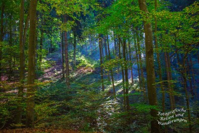Blaues Licht im Herbstwald Veldenz