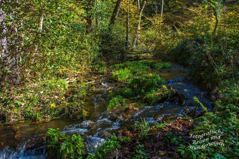 Naturwaldreservat Veldenzerhammer am Hinterbach