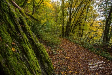 Felsformationen im Wald bei Veldenz.