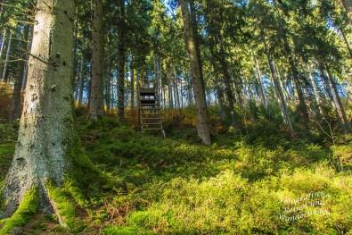 Ein weicher Wiesenweg ist mir vergönnt, führt durch ein kleines Waldstück, ein Ansitz zeugt von jagdlichen Tätigkeiten