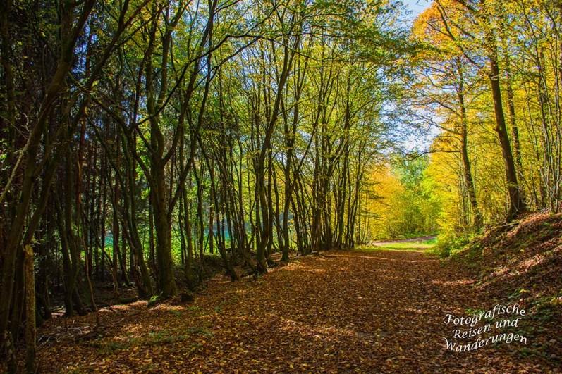 Waldweg entlang der Dhron
